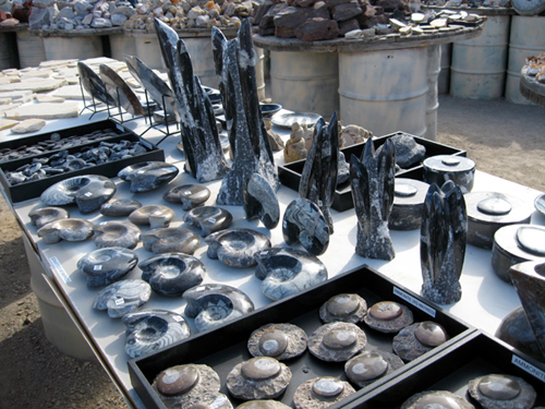 Fossils for Sale in Quartzsite, AZ Rock and Mineral Shop