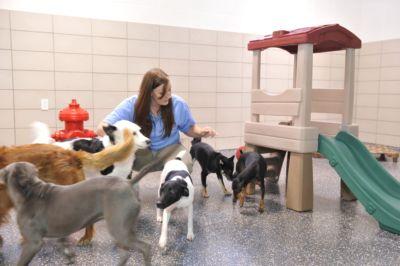 Doggy Day Camp at Best Friends Pet Resort at Walt Disney World
