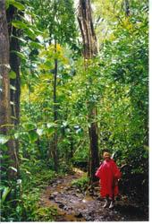Walking through the rainforest on Oahu