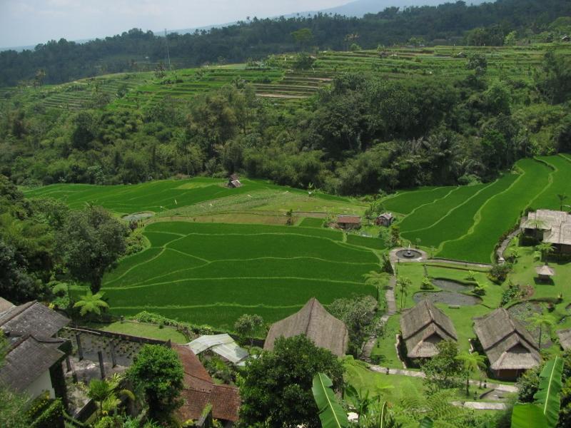 Saranam Eco-Resort