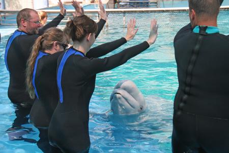 Beluga Whale Encounter at SeaWorld