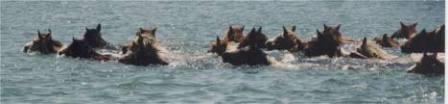 Coast Guard Ponies