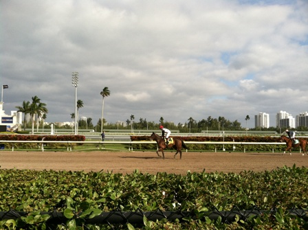 A day at the races, Gulfstream park