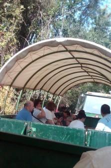 Riding the hayride caravan