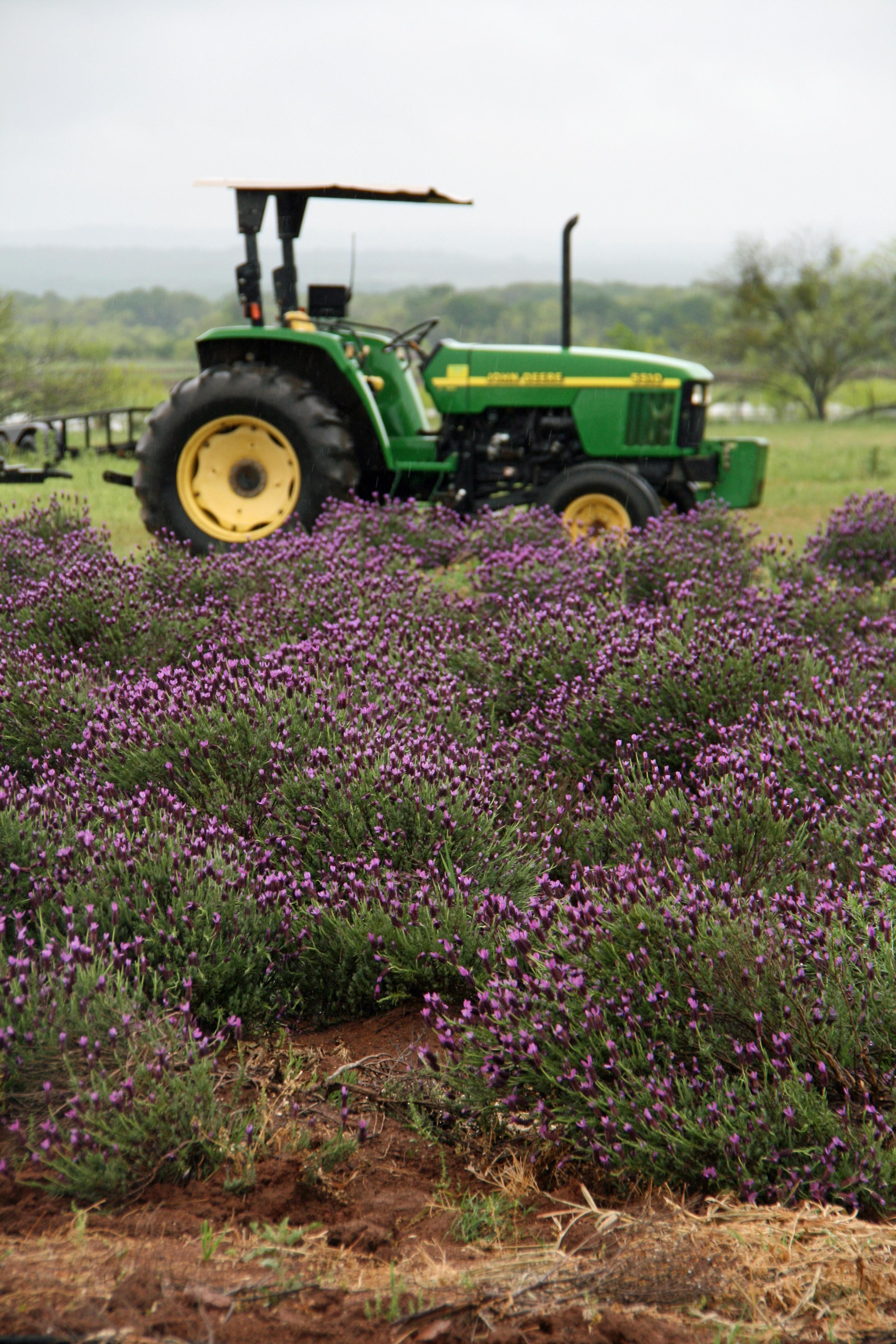 Hill Country Lavender Farm