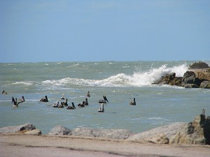 Pelicans at jetty in storm